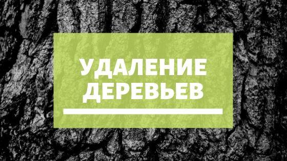 Уход и лечение деревьев